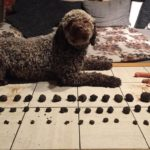 Hundetraining-Trüffel