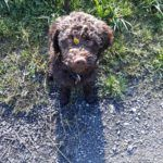 Gutschein für Hunde-Trüffeltraining